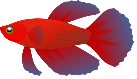 582x336 Betta Fish Clip Art