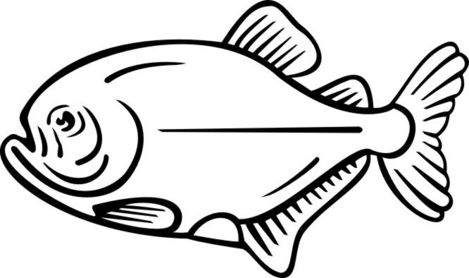 666x394 Drawn fish piranha