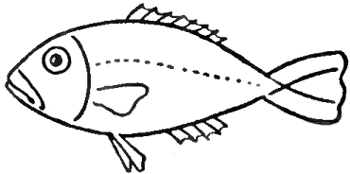 350x174 How to Draw Fish in Easy to Follow Steps Drawing Lesson