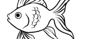 272x125 best 25+ fish drawings ideas on fish art, fish on