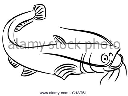 Fish Line Drawing Free Download Best Fish Line Drawing On
