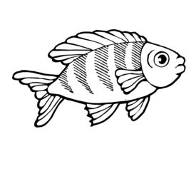 268x268 Trout Coloring Page, Trout Pictures And Outlines For Fish Coloring