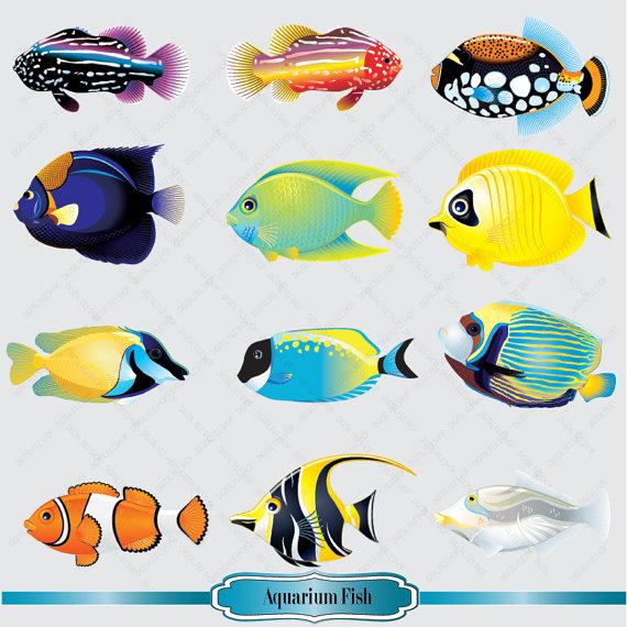 570x570 Aquarium Clipart Aquarium Animal