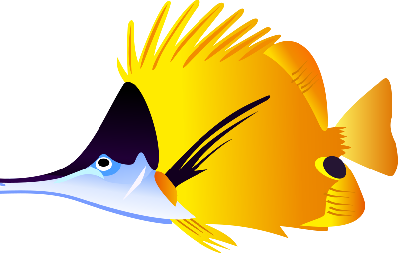 800x509 Angel Fish Clipart Free Clipart Images 2