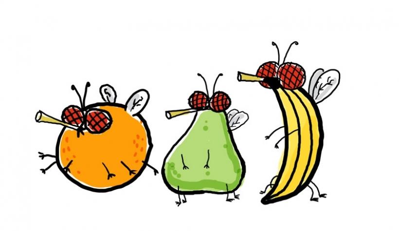 820x474 Fruit Fly Clip Art Cliparts