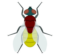 210x190 Bug Clipart House Fly