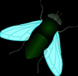 300x294 Green House Fly Clip Art