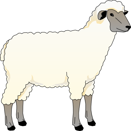 555x554 Flock Of Sheep Clip Art