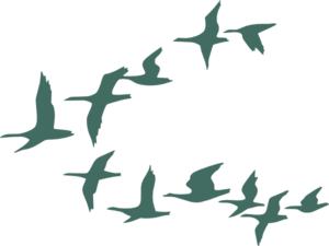 300x225 Teal Flock Of Geese Clip Art
