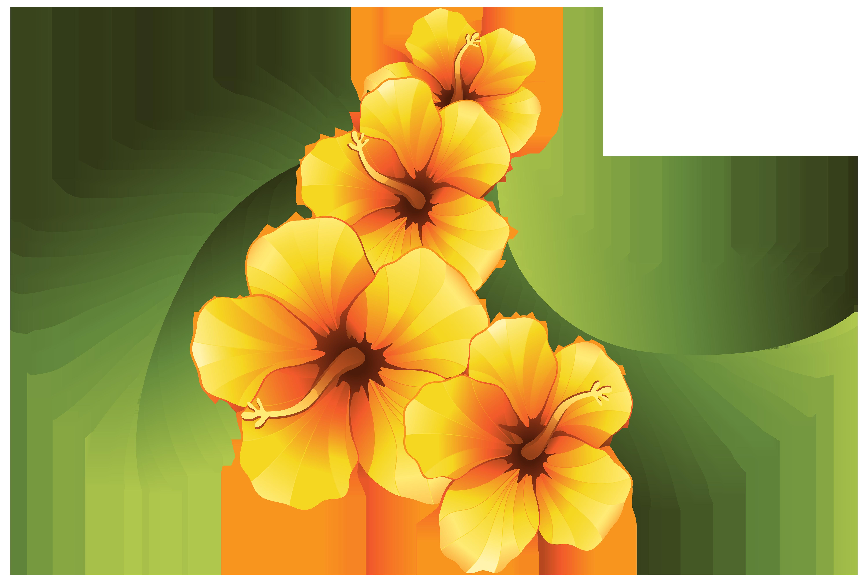 6000x4023 Orange Flower Clipart Decorative