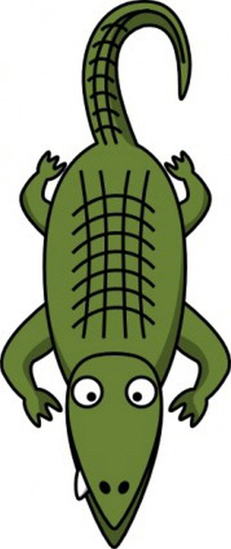 490x1163 Amphibian Clipart Florida Gator