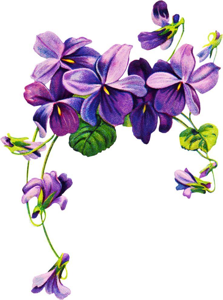 736x990 Violet Flower Clip Art Cliparts