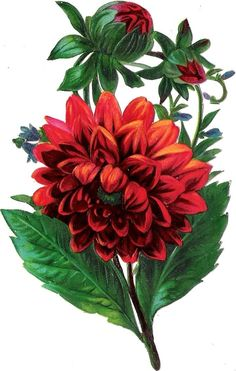 236x371 Clip Art Of Flower Bouquets Images Free Flower Clip Art