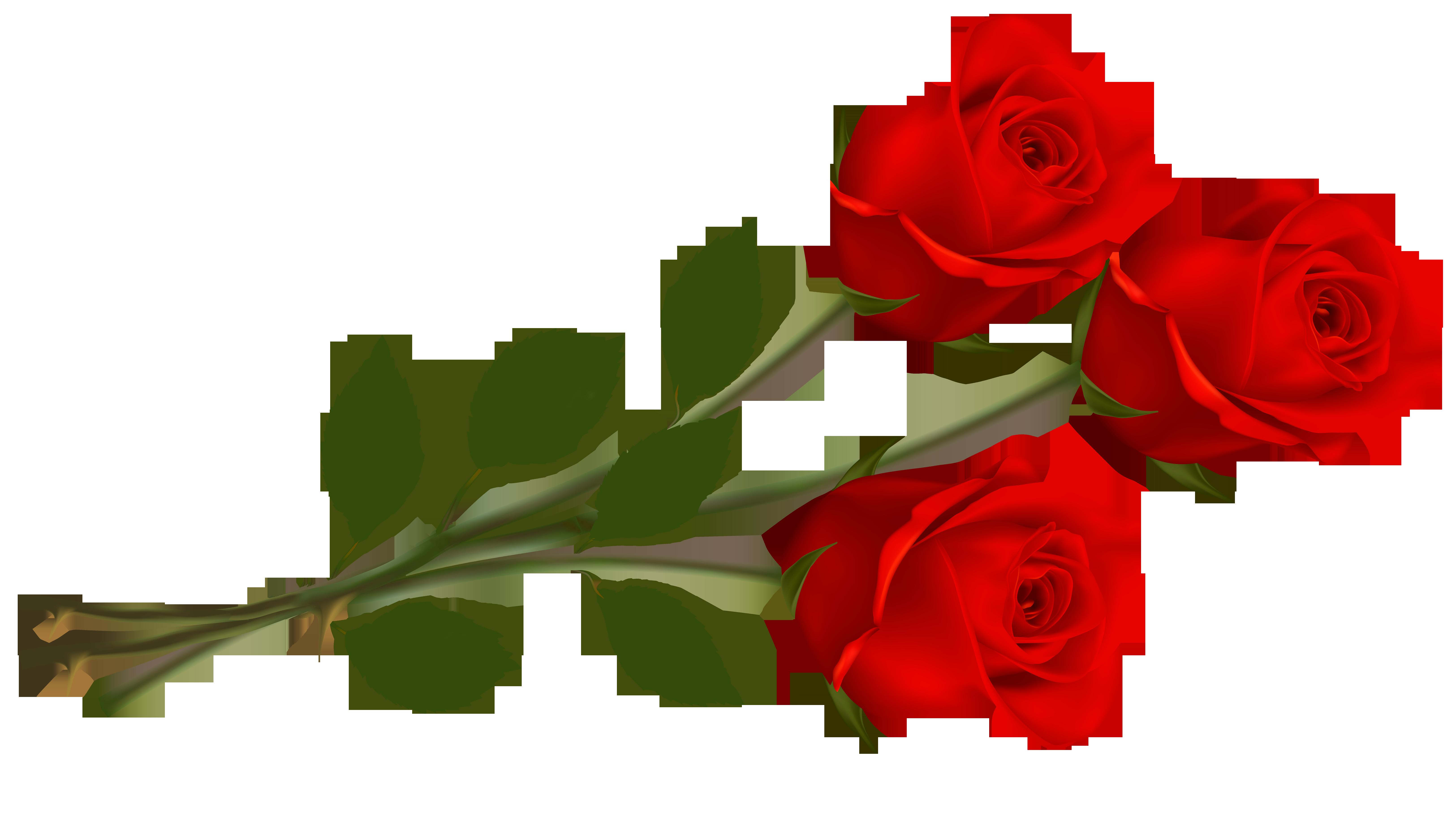 6500x3637 Top 75 Roses Clip Art