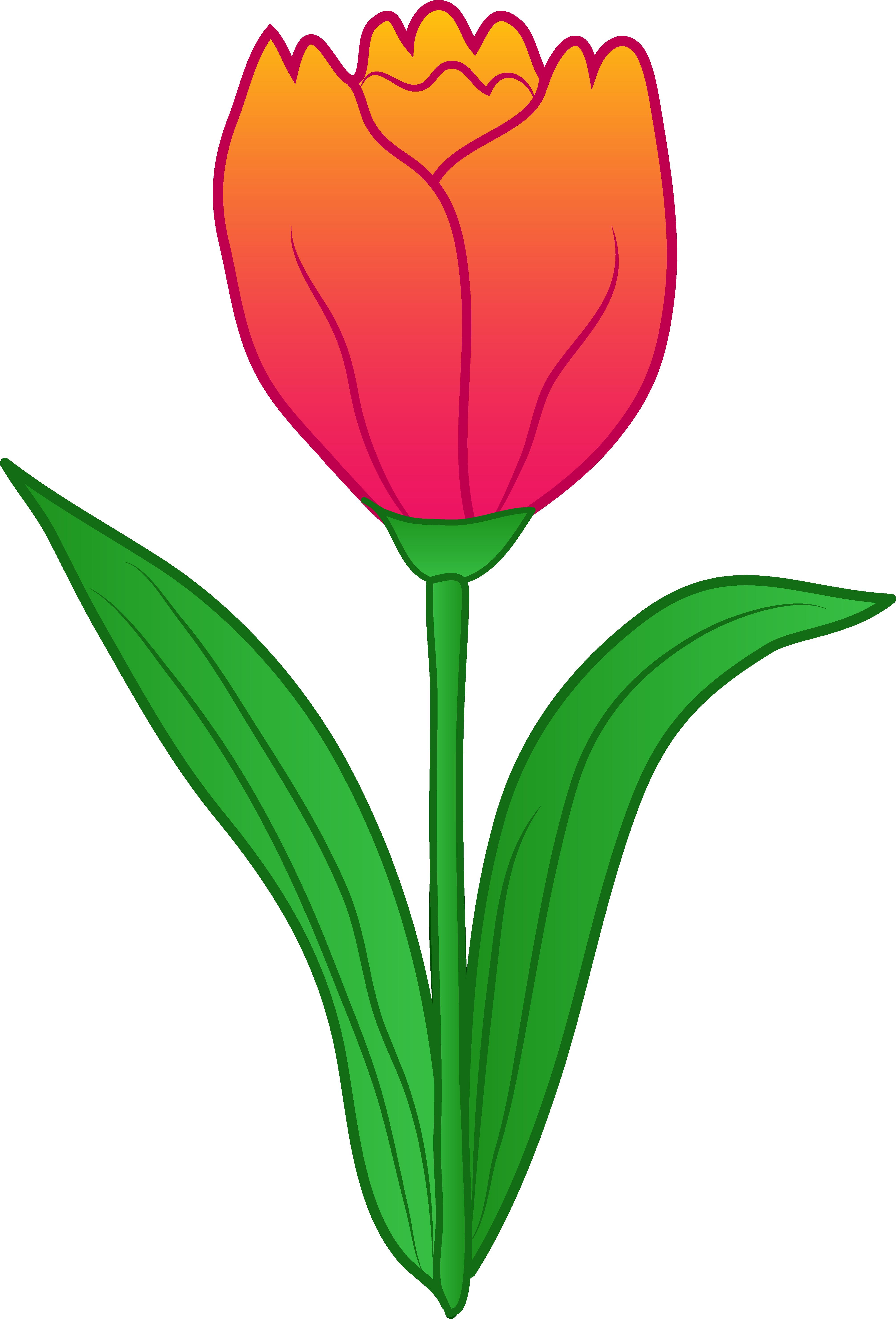 4024x5921 Top 76 Tulip Flower Clip Art