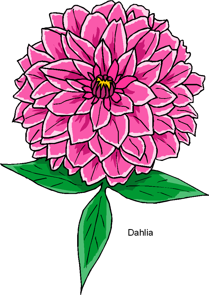 734x1034 Dahlia Flower Clip Art