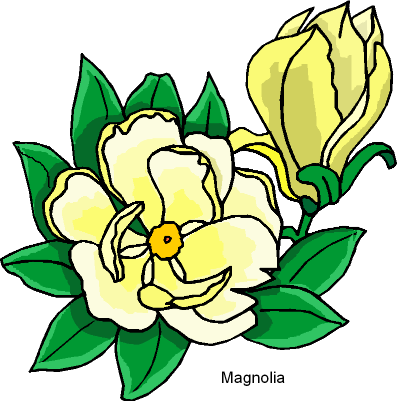 794x803 Magnolia Flower Clip Art