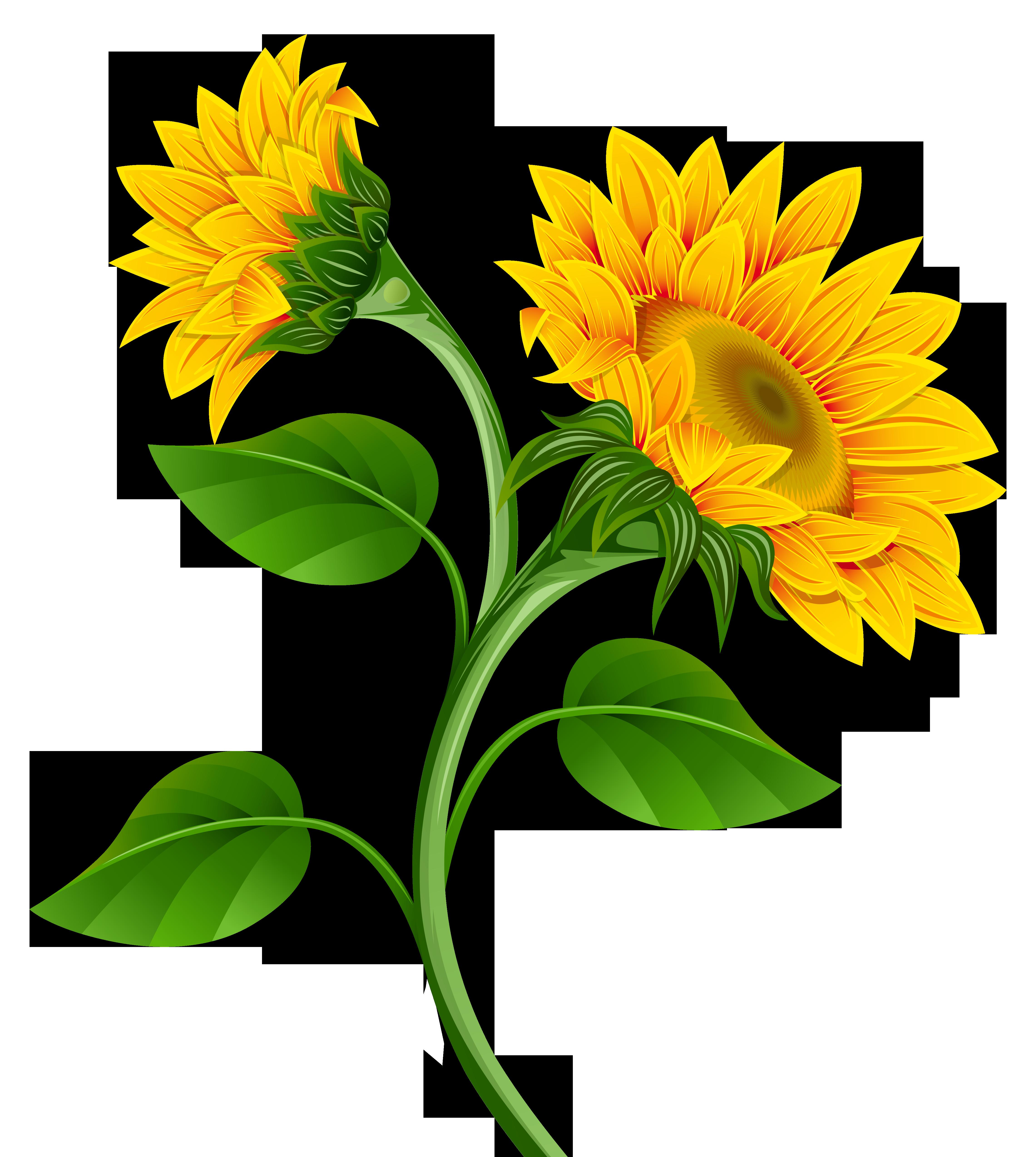 4563x5096 Sunflower Clipart Transparent Background