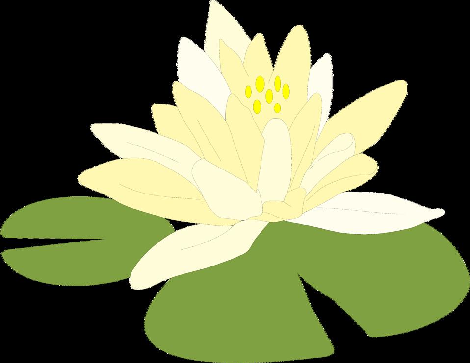 Flower Clipart Transparent Background