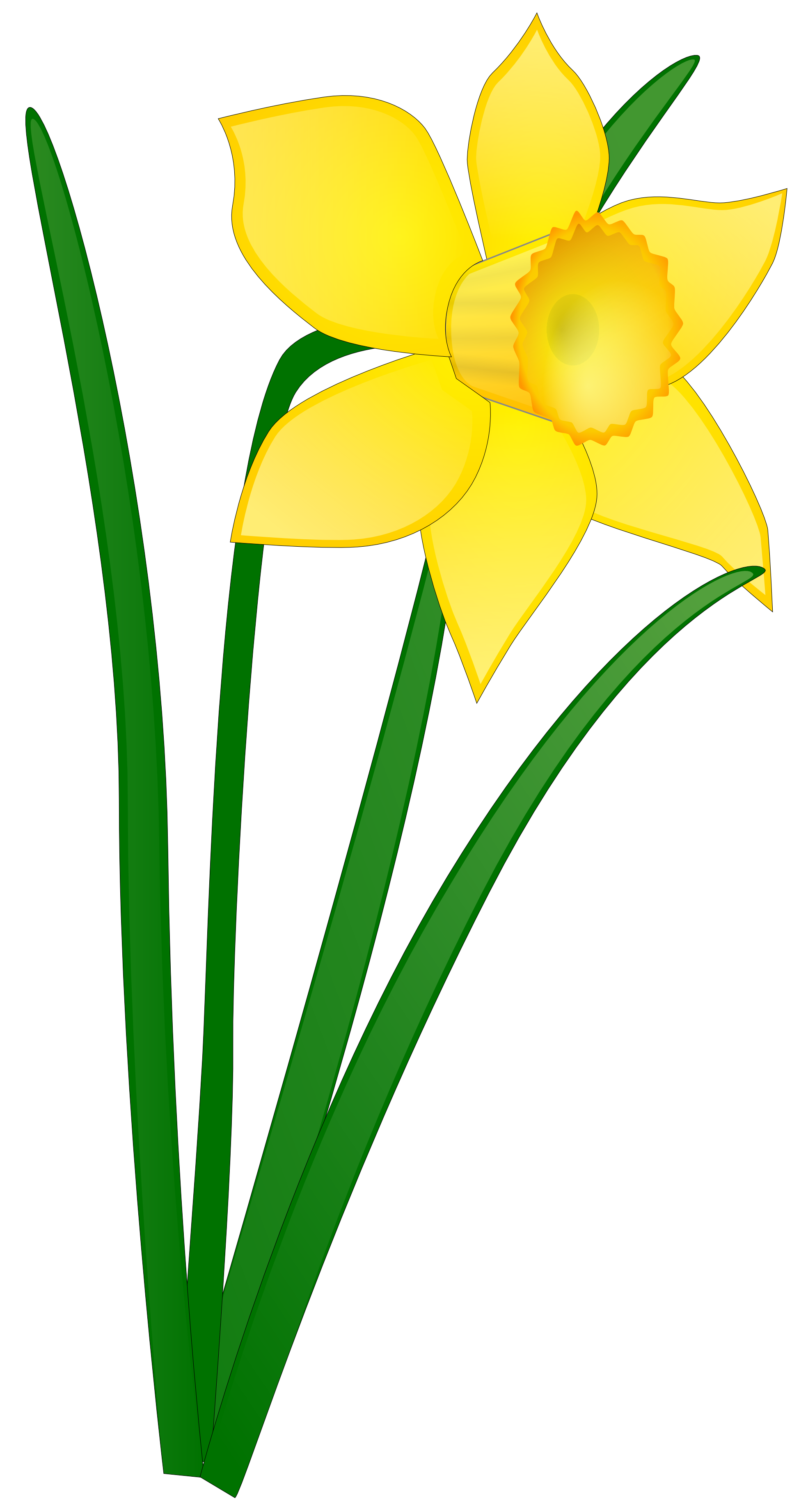 1969x3684 Daffodil Flower Clip Art Clipart Panda Free Clipart Images
