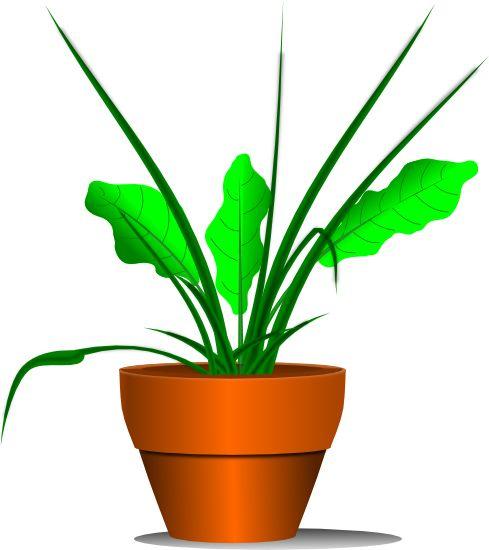 489x550 Plant Clipart Transparent Background
