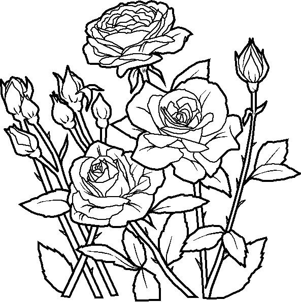 593x596 Bunch Ideas of Flower Coloring Pages With Worksheet