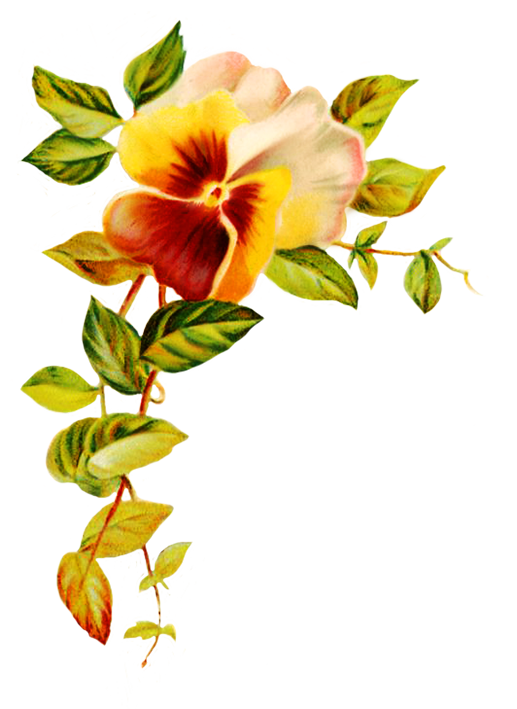 517x709 Digital Scrapbooking Flowers