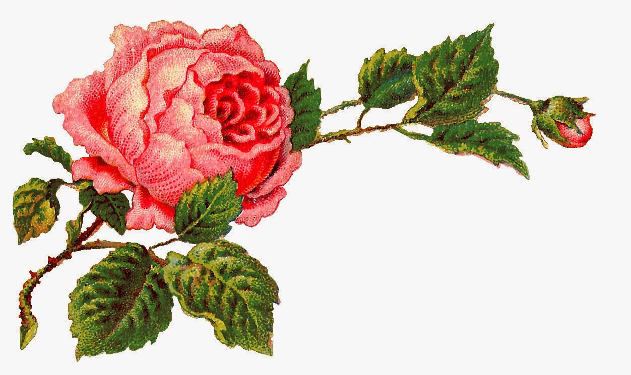 1252x745 Antique Images Free Digital Flower Label Pink Rose Clip Art