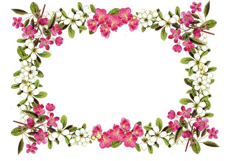 736x525 Pink Flower Clipart Flower Bottom Border