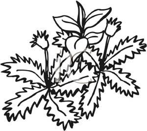 300x267 Garden Weed Clipart