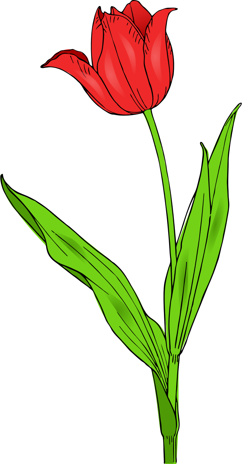 800x1534 Garden Clipart Flower Stem