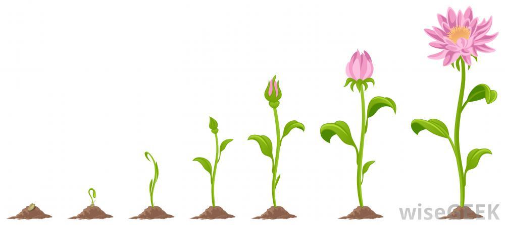 1000x447 Flower Growing