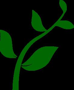 246x299 Growing Plant Clip Art