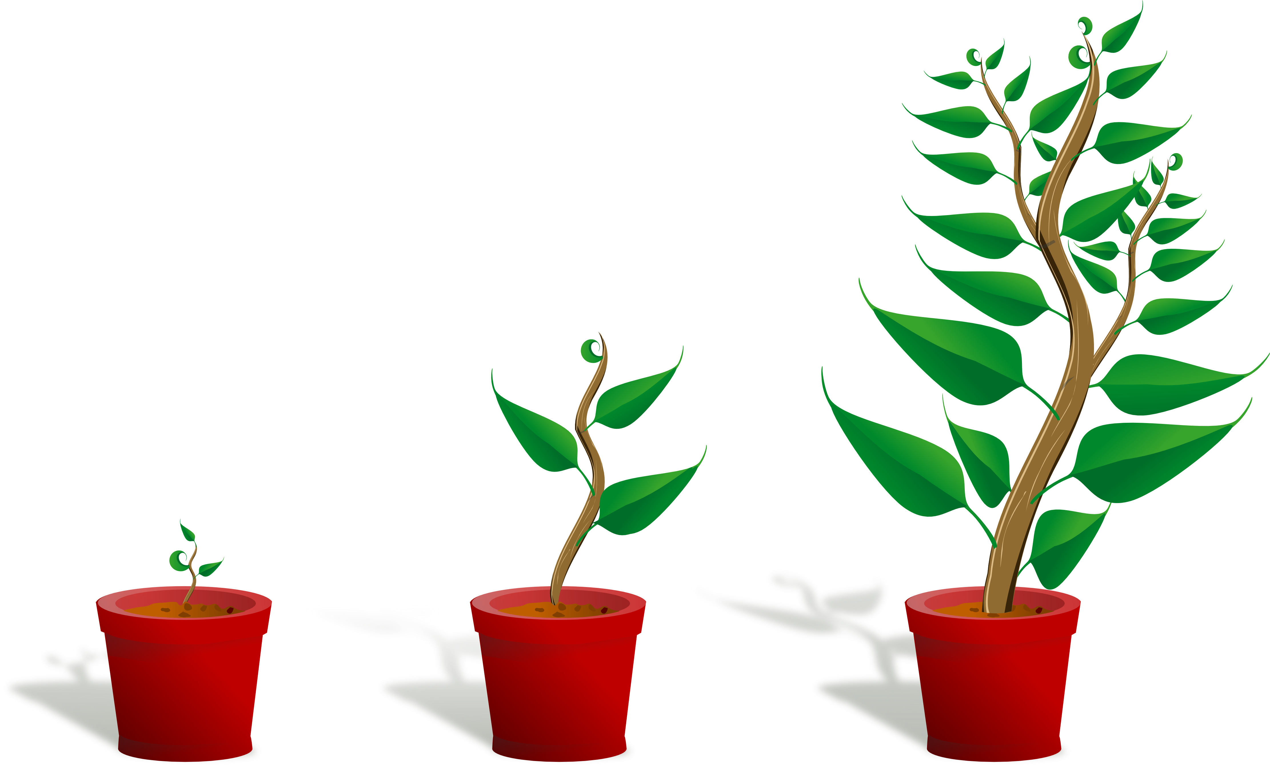 4444x2678 Plant Clipart Flower Growing