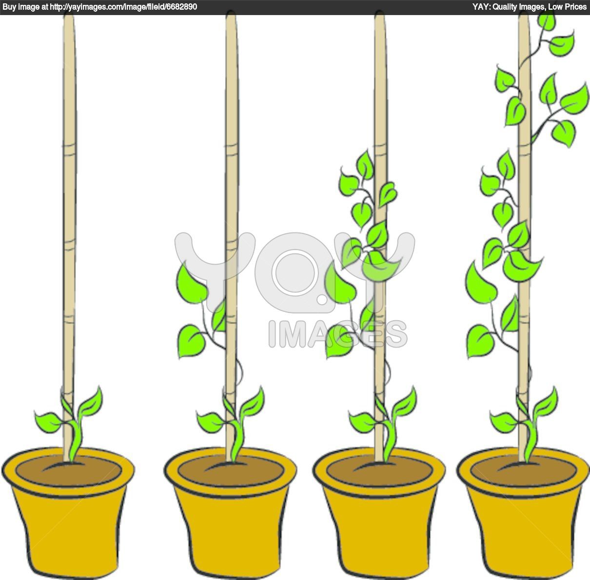 1210x1190 Plant Clipart Growing Stage