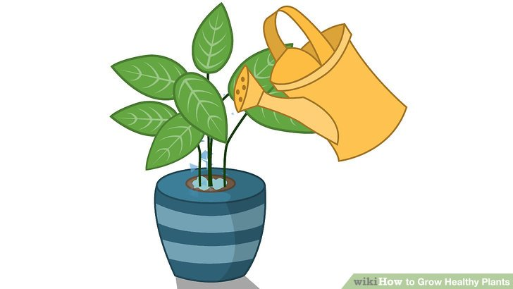 728x410 Pot Plant Clipart Tree Growing