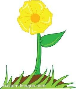 255x300 Clipart Illustration Of A Bright Yellow Flower Growing In Soil
