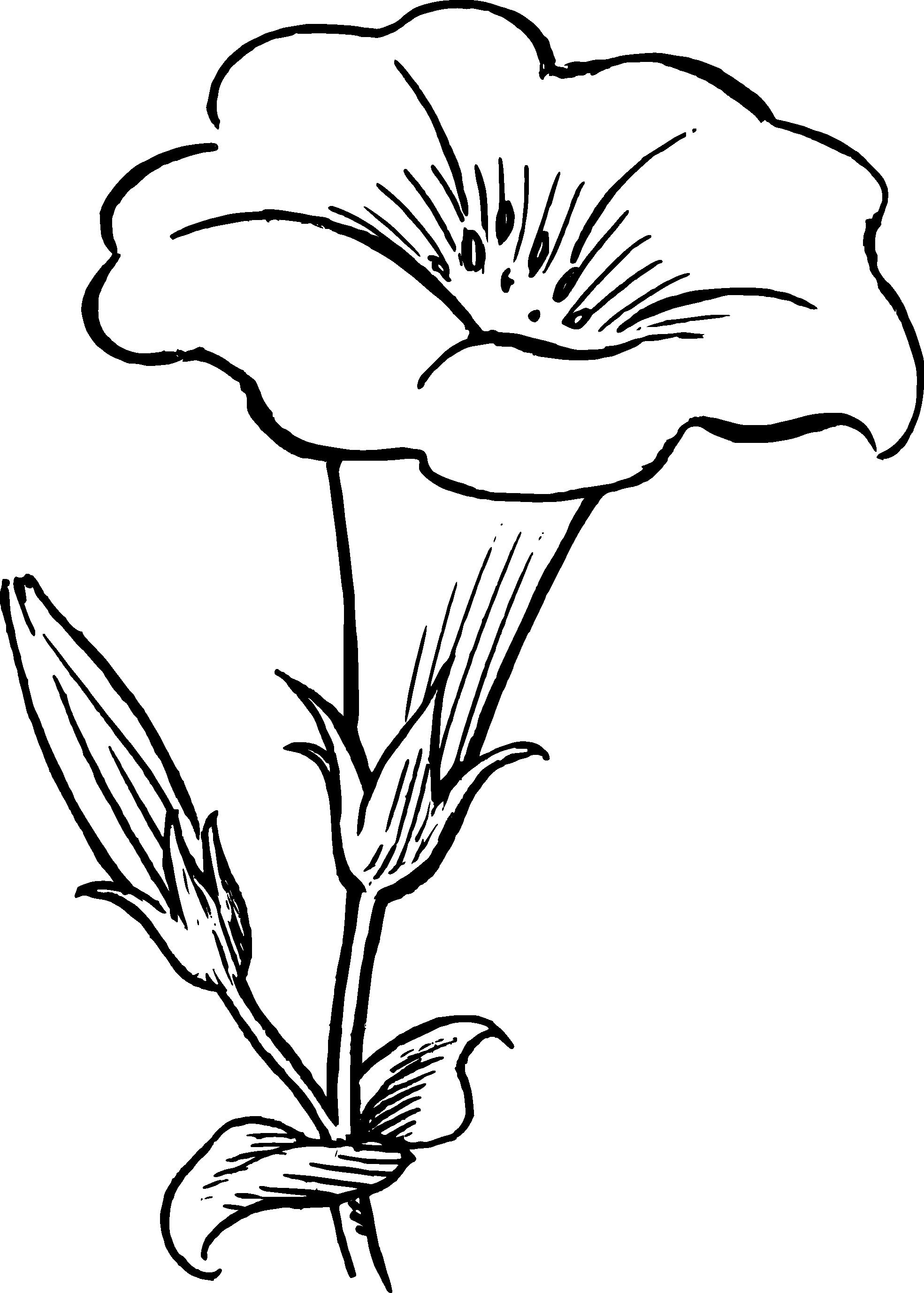 1969x2756 Drawn Flower Black And White