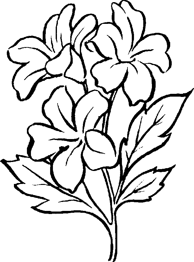 627x846 Flower Clipart Black And White