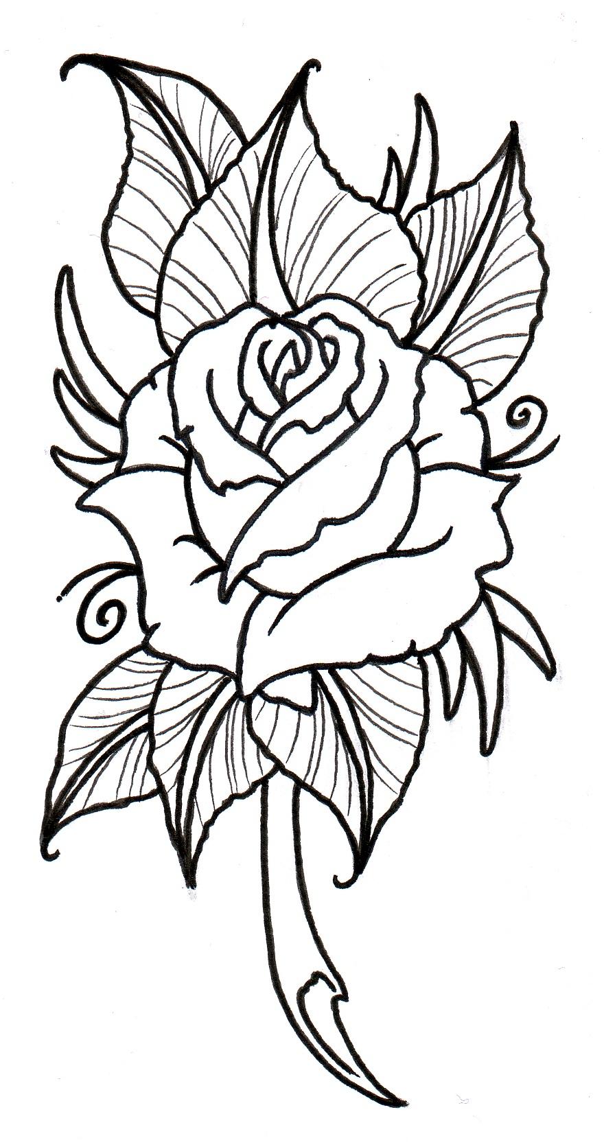 880x1671 Rose Line Drawing Clip Art