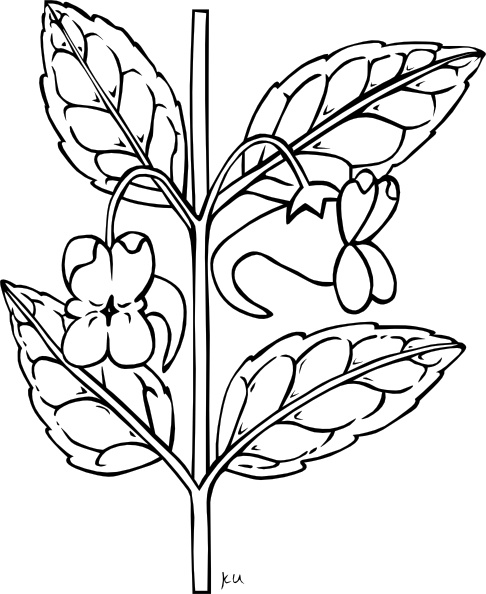 486x594 Stem With Flower Outline Clip Art Free Vector In Open Office