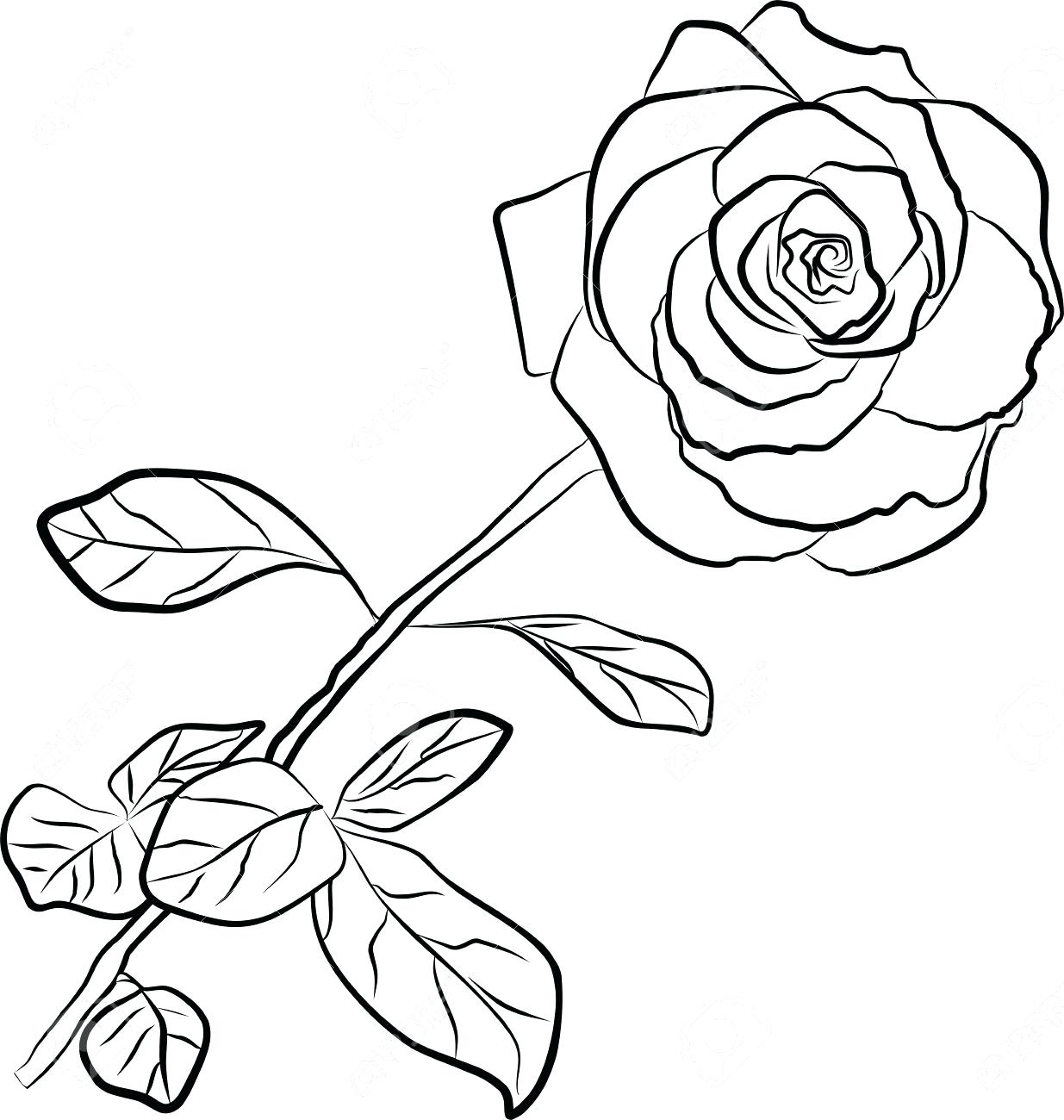 1235x1300 Coloring Appealing Flower Outlines. Flower Outline Embroidery