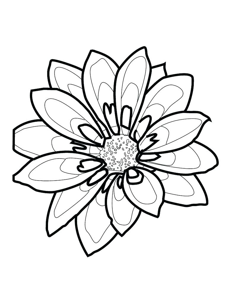 786x1017 Black And White Flower Outline Image Collections
