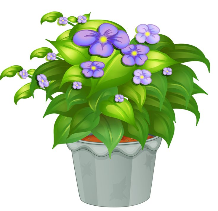 Flower Pot Image