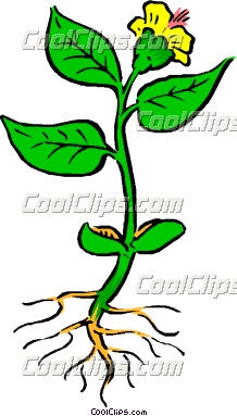 218x383 Flower With Roots Clipart