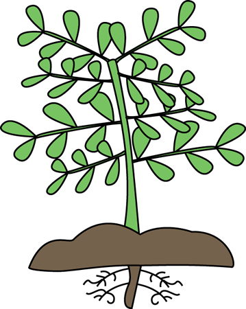 359x450 Plant With Roots Clip Art