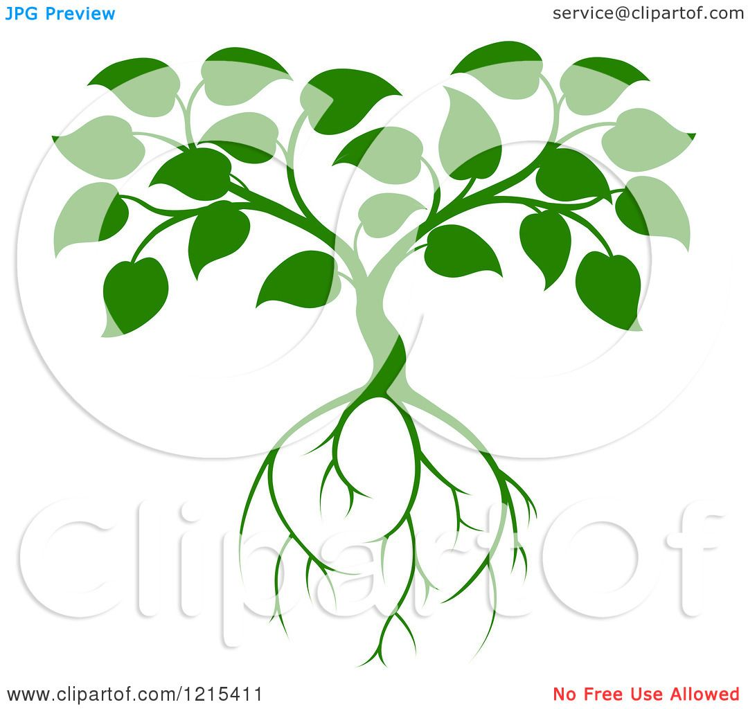 1080x1024 Roots Clipart Leaf Tree