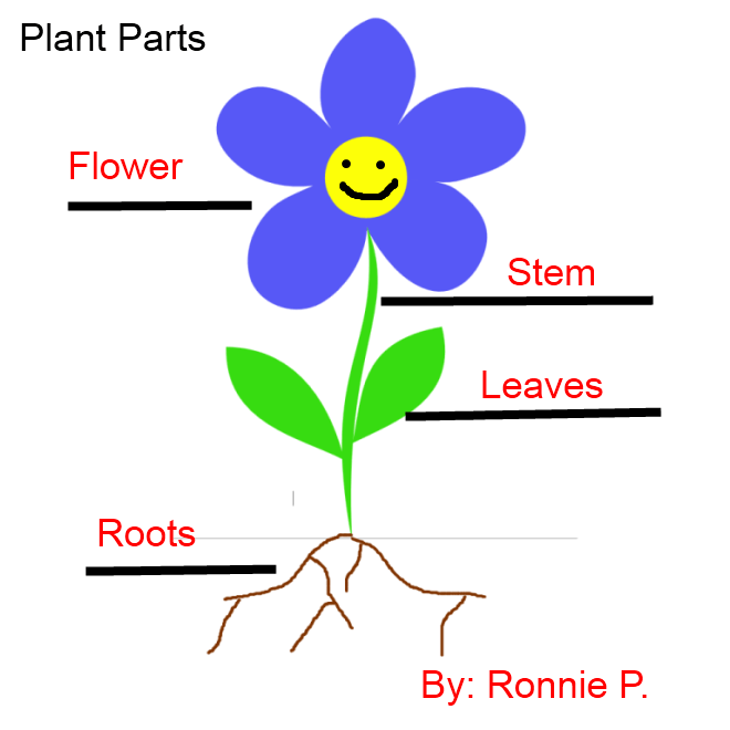660x660 Science Flower Cliparts 255647