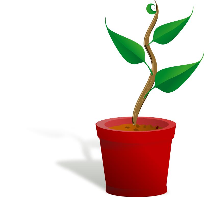 800x774 Plant Clipart Plant