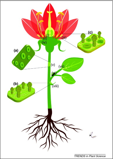 389x546 Flower With Roots Clipart